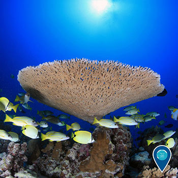 photo of coral and yellow fish