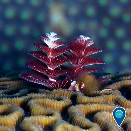 photo of christmas tree worms