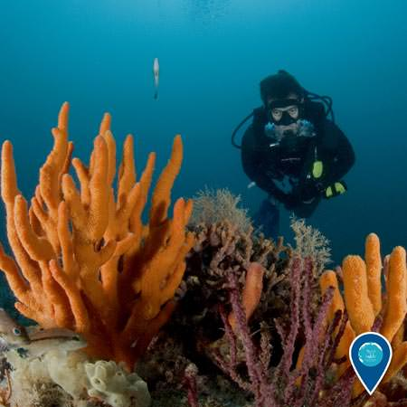 diver examining a coral reef