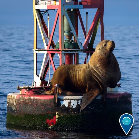 sea lion resting on a buoy