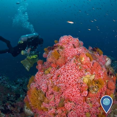 diver collecting samples near a coral reef