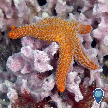 orange seastar on top of a piece of coral