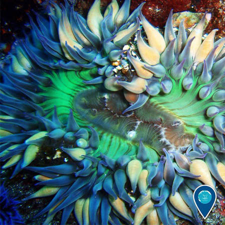 photo of a colorful anemone