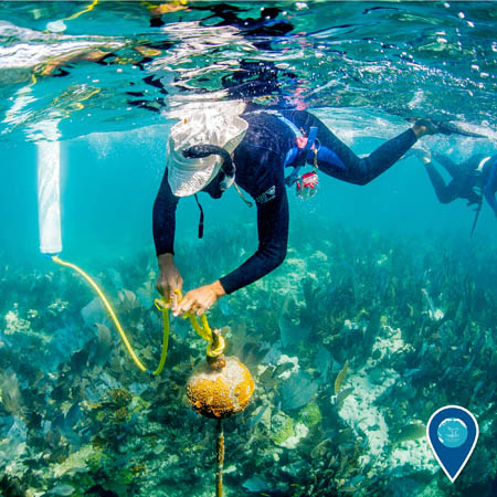 snorkeler attaching a line to a mooring buoy
