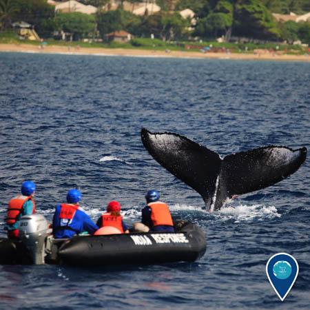 people aboard a zodiac attempting to remove marine debris from a humpback whale
