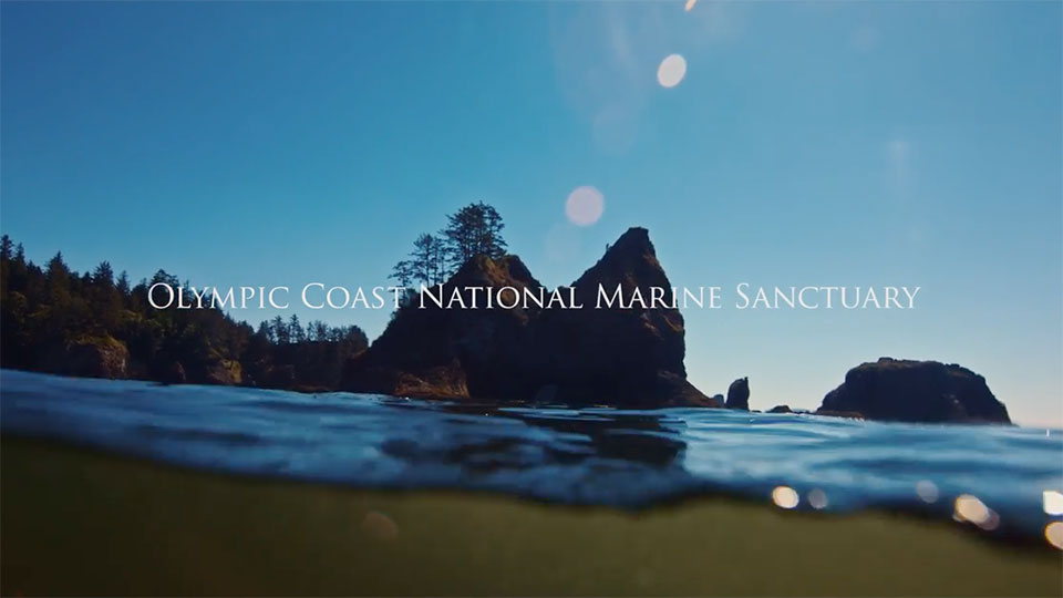 photo of cliffs and beach of olympic coast national marine sanctuary