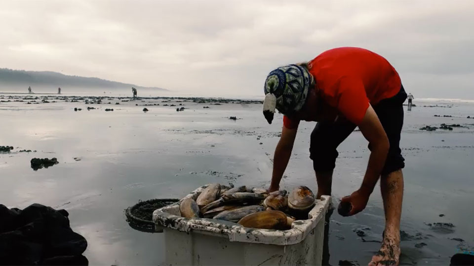 photo of a person digging up clams