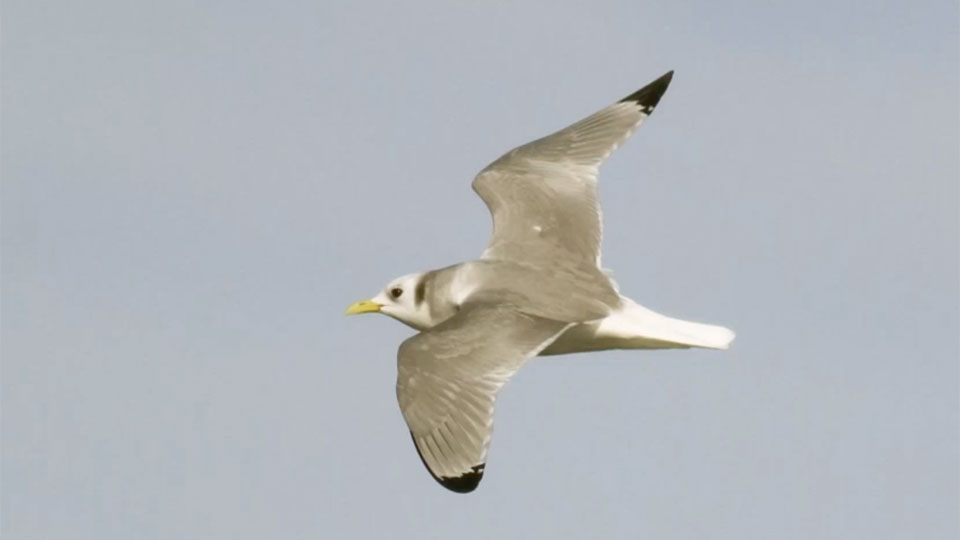 seabird soaring through the air