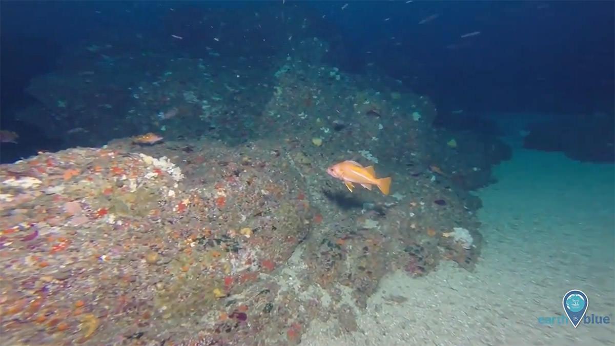 fish swimming near a reef