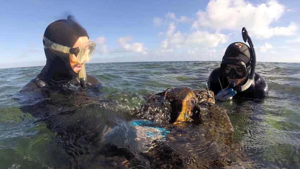 photo of the divers saving a sea turtle