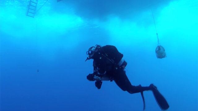A scuba diver floats below the surface