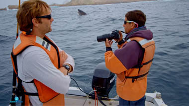 researchers looking out for white sharks