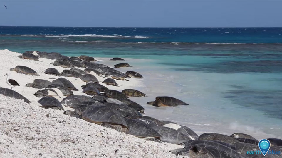 many sea turtles gathered on a beach