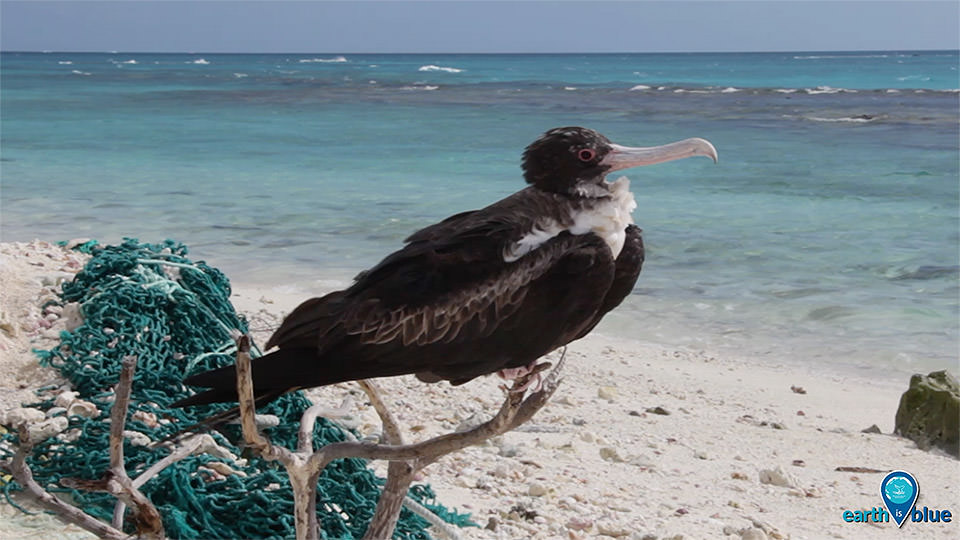 photo of bird sitting on marine debris
