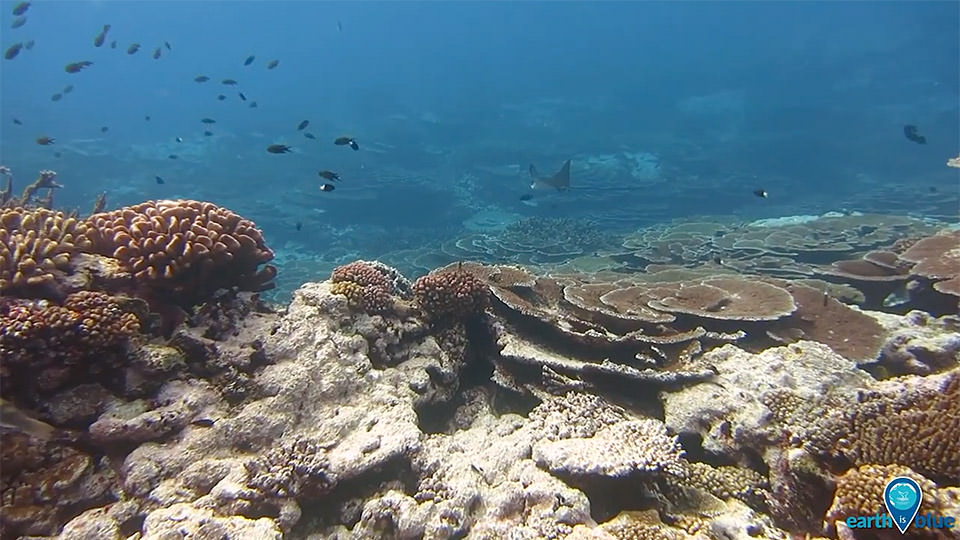 photo of coral in american samoa