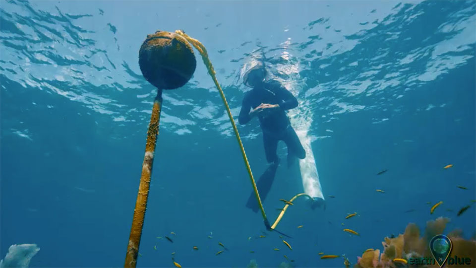 photo of a diver and a buoy
