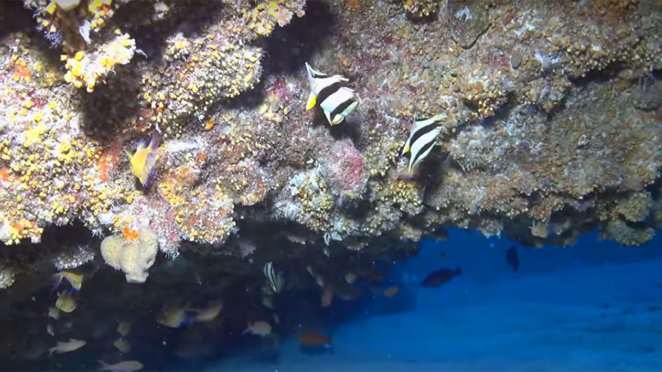 photo of 2 butterfly fish swimming in deep reefs