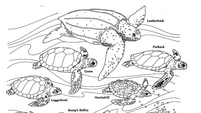coloring pages and puzzles