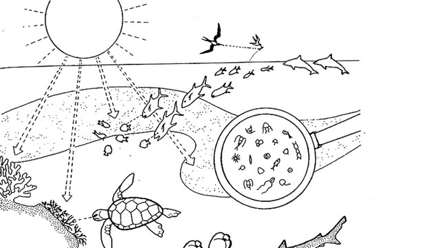 Science Coloring Pages Bright Ideas Scientific Method Coloring