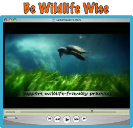Be Wildlife Wise Video