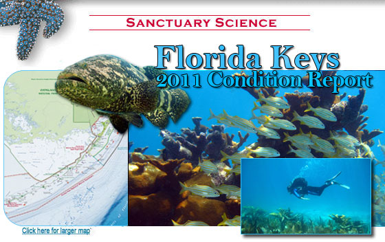 Florida keys Condition Report