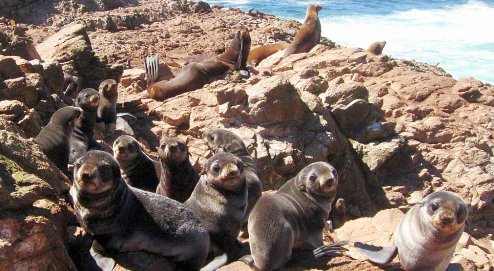 photo of fur seal pups on a beach
