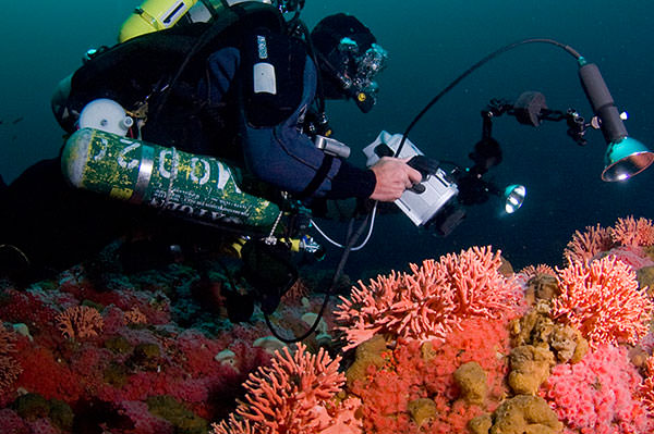 diver assessing coral