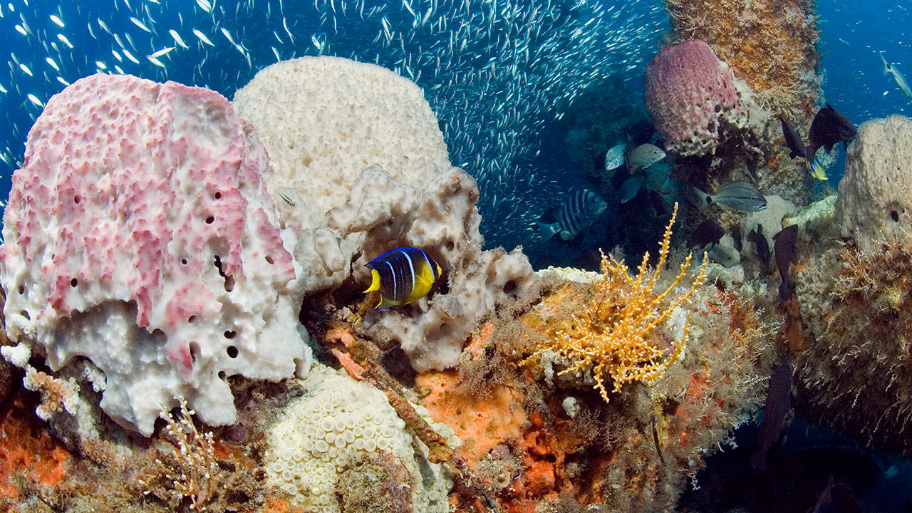 photo of fish and coral at gray's reef