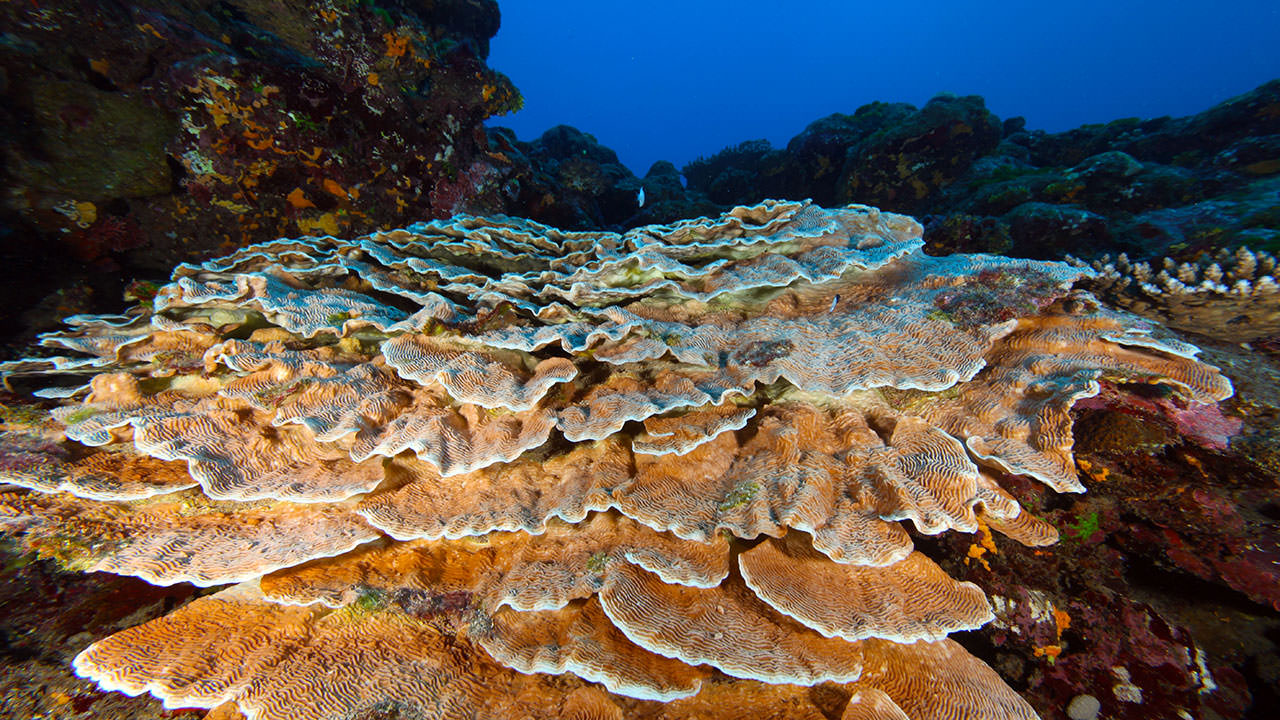 photo of healthy coral