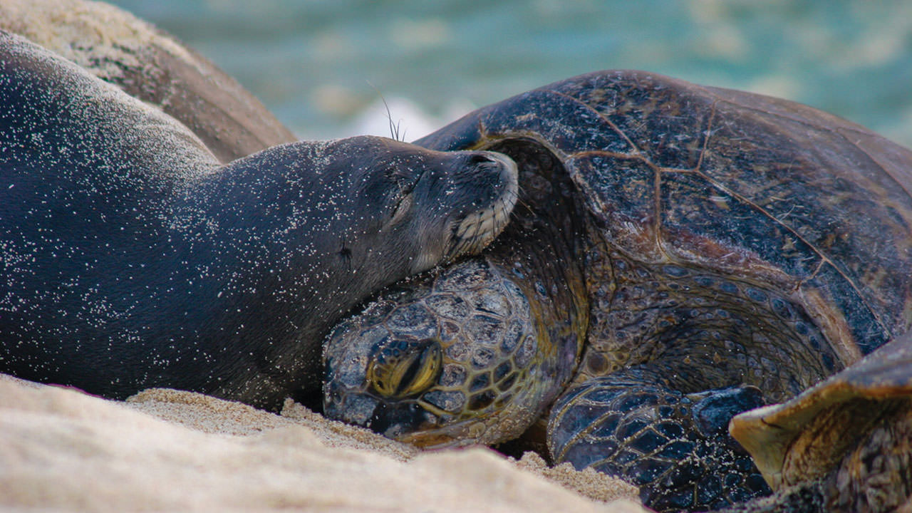 photo of turtle and seal