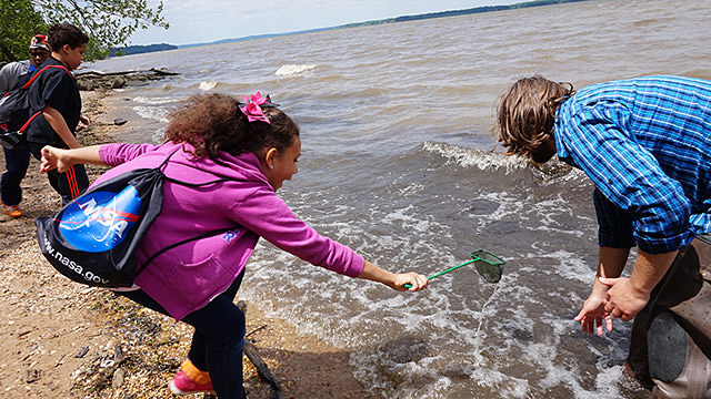 students with nets collecting samples near the shore