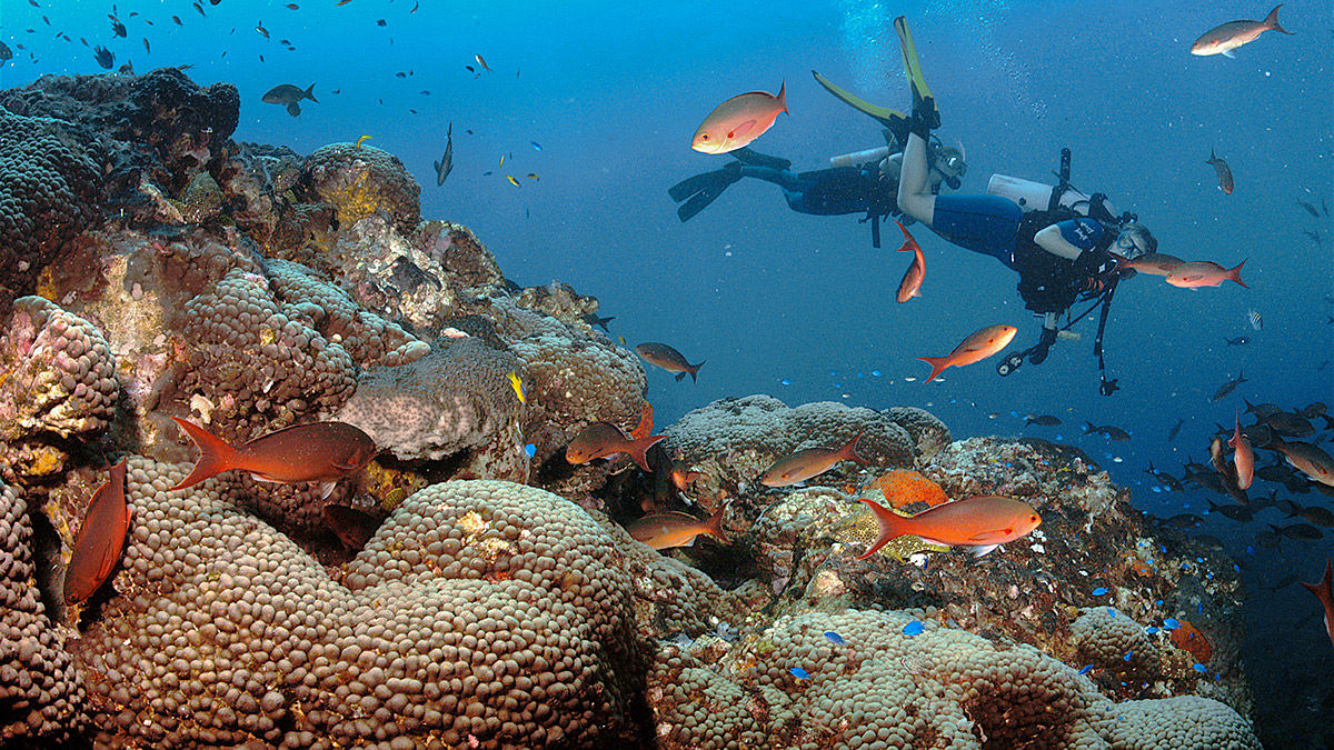 diver swimming by a reef teeming with fish
