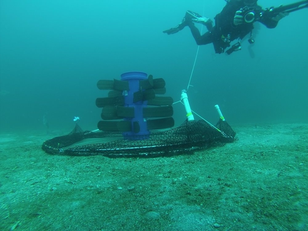 a fish aggregation device (fad) with two hinged half-hoops covered in mesh netting lie open. a diver is filming near the trap