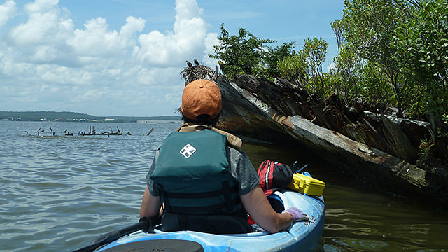 kayaker looking at a wreck in mallows bay