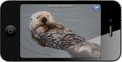image of otter on iphone