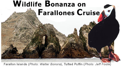 Farallones Cruise Header