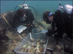 monitoring the coral reef
