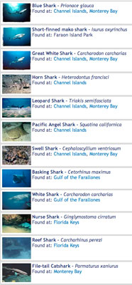 shark encyclopedia screen capture