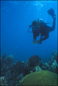 Tortugas Reef Survey