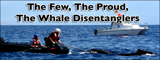 Whale Disentanglement
