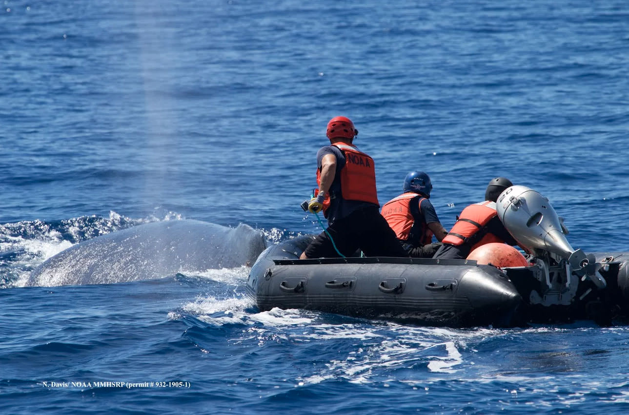 researchers on a raft disentangling a whale