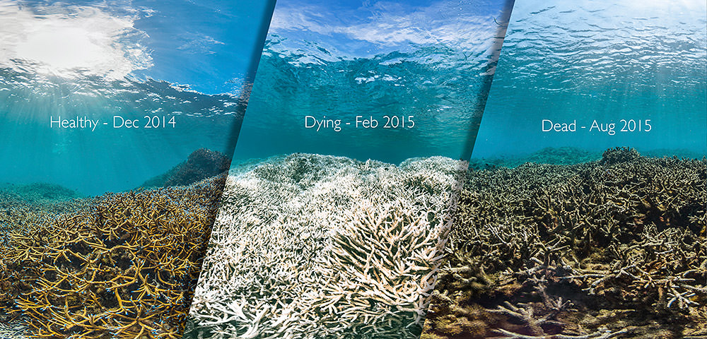 Before, durring and after photos of coral bleaching