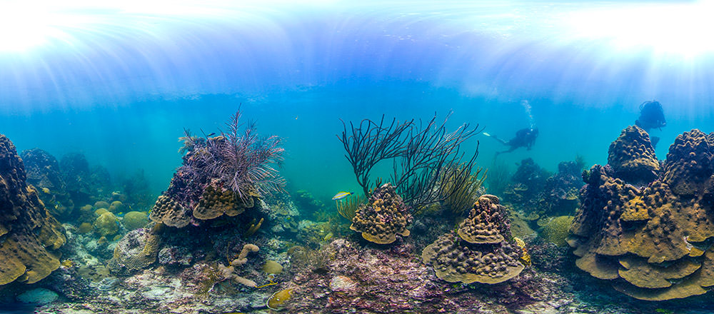 How is coral bleaching affecting national marine sanctuaries panoramic view of a coral reef in florida keys sciox Images