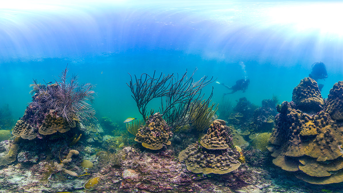 panoramic view of a coral reef in florida keys