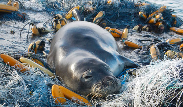 seal resting on marine debris