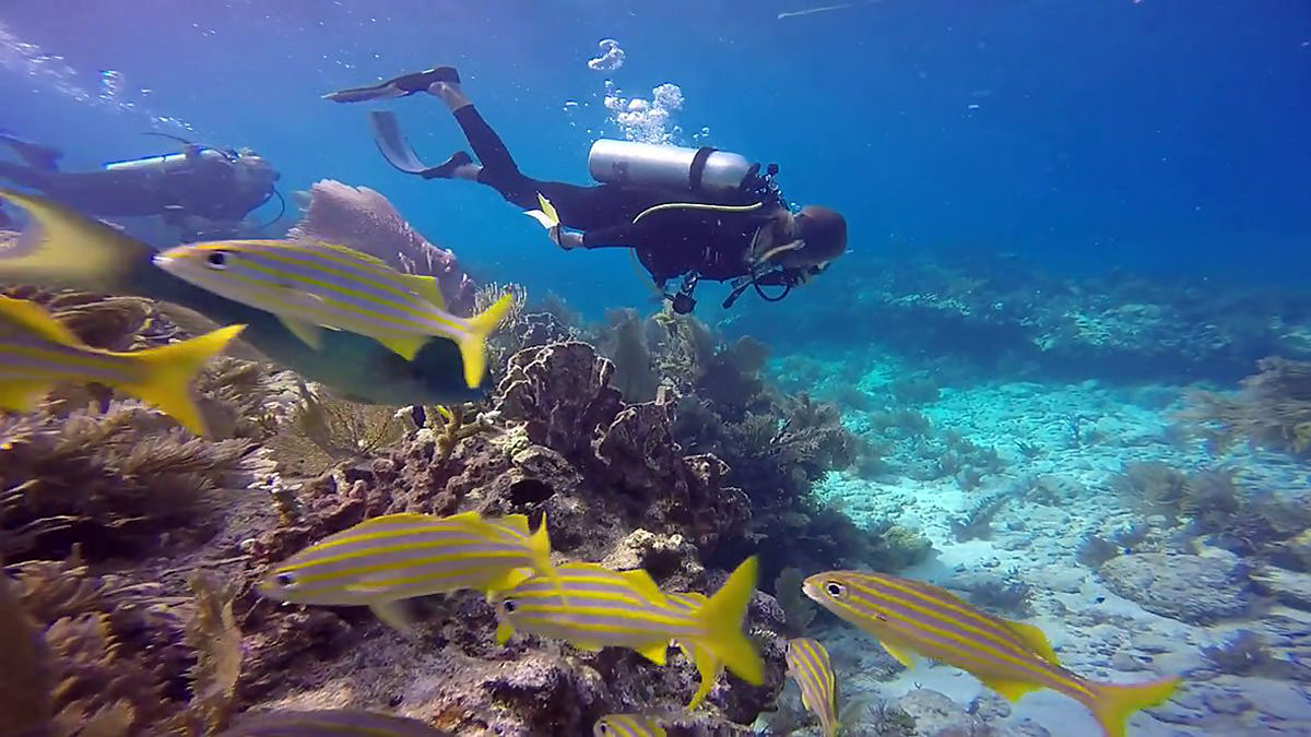 diver swimming above a reef with fish swimming by