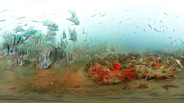 New Virtual Dive Gallery Puts National Marine Sanctuaries at the Tip of