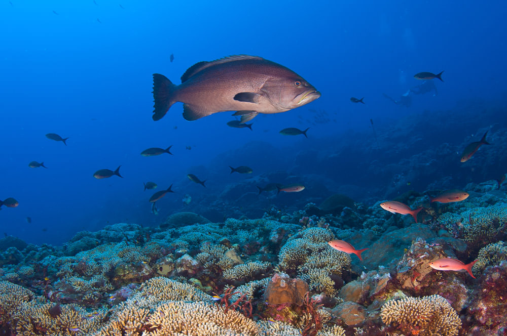 U S And Cuba To Cooperate On Sister Sanctuaries Office Of National Marine Sanctuaries