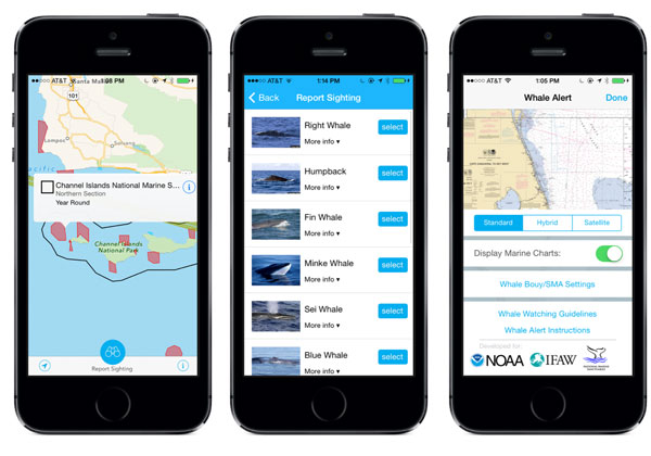 Updated 'Whale Alert' iPad, iPhone App Invites Public to Contribute to Protection of West Coast Whales