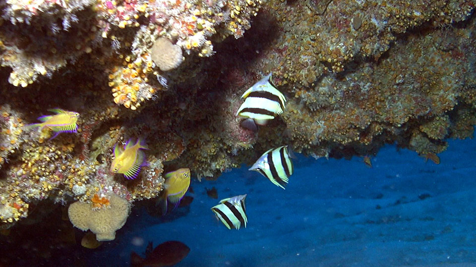 photo of three butterfly fish
